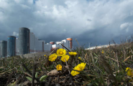 appeared: The first spring flowers have appeared in the city after the winter