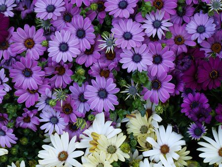 A lot of colorful flowers