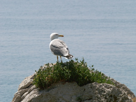 Seagull on a rock Stock Photo - 9201338