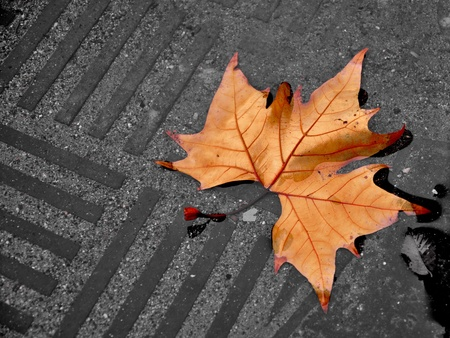 Fallen leaf in a paddle Stock Photo - 16952627