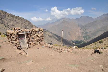 graze: Goats graze on the hill at 2479m high