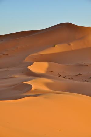 lonliness: Merzouga desert in Morocco