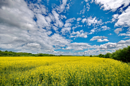 blue sky and fields: Rape field Stock Photo