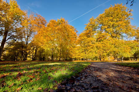 autumn trees: Colorful autumn trees Stock Photo
