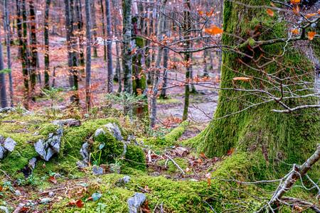 森の木々のグレンコ 写真素材 - 107572344