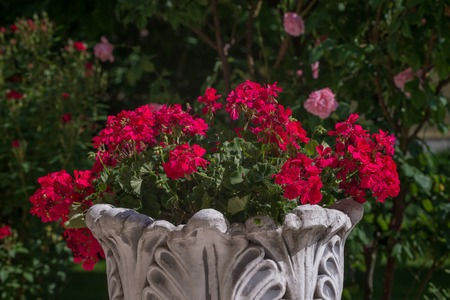 Flowers in a round flowerbed in the garden