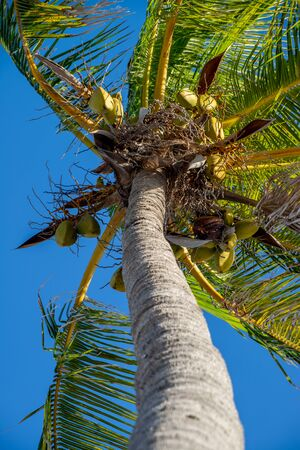 Palm tree and blue sky from low angle in Key West, Florida