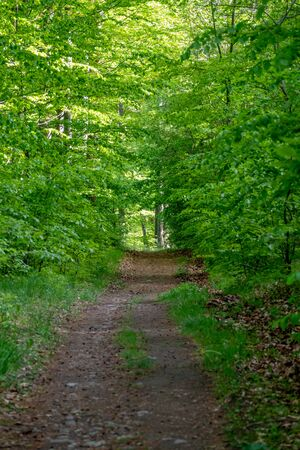 Road going through sunny green Forest at spring