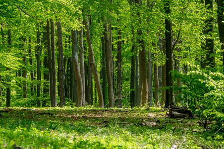 Beautiful nature at spring in the forest