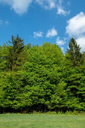 Beautiful nature at spring in the green forest 免版税图像