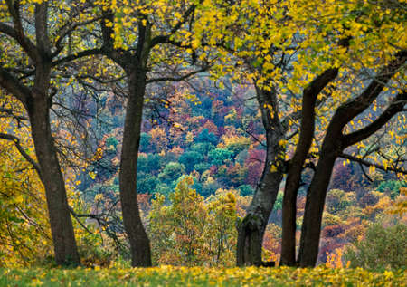 Collection of Beautiful Colorful Autumn trees