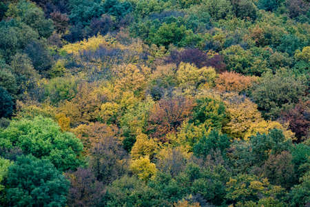 Aerial view of beautiful orange and red autumn forest 免版税图像