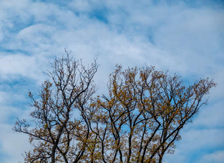 Colorful autumn trees and blue sky 免版税图像 - 158210847