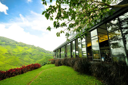 sg: Cameron Highlands, Perak, March 2011 : Boh Tea Plantation look out point at Sg Palas