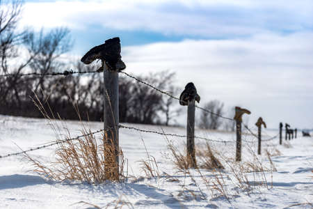 Old boots on top of fence line south of Swift Current, Saskatchewan, Canada with tall grass poking out of the snow and blue sky