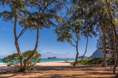 View of Rabbit Island from Waimanalo Beach on Oahu, Hawaii with ironwood trees, a lifeguard tower and a surf board in the foreground