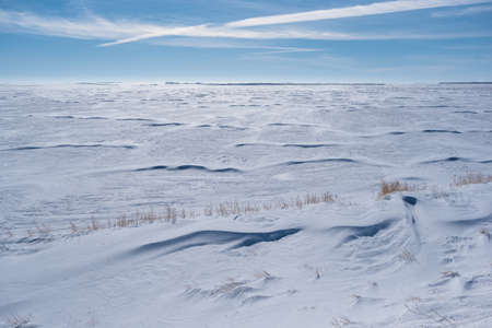 Vast snow covered field in Saskatchewan with grass poking out of snowbank