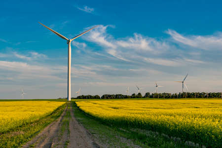 Wind turbine at the end of a road in a canola field 스톡 콘텐츠