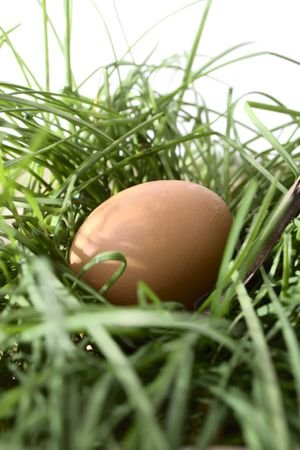 brown hens egg on green grass isolated photo