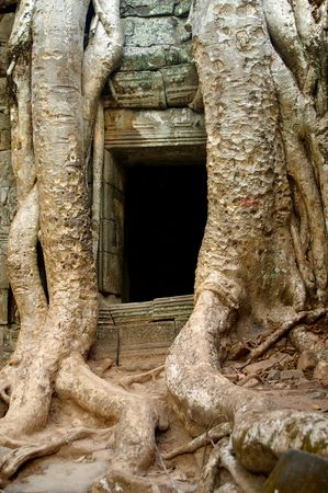 roots taking over a doorway of acient ruins in cambodia photo