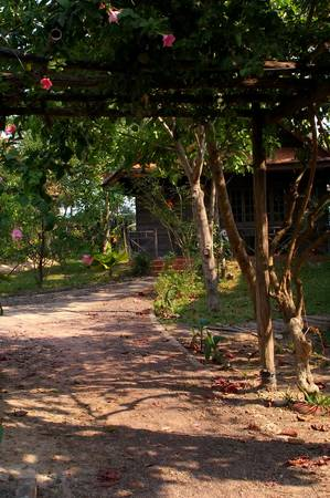 Rustic Cambodian village garden showing ppath winding to house photo