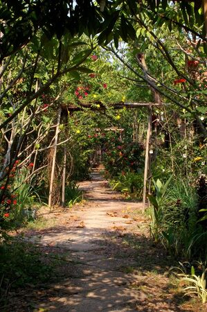 bamboo archways leading down the village garden path photo
