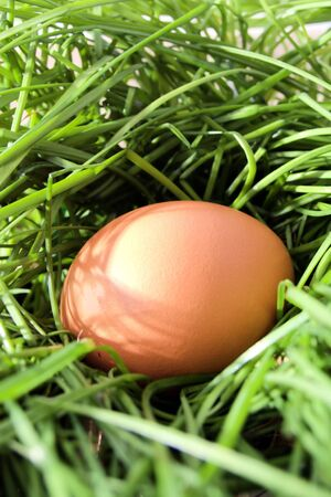 Chicken brown egg in long grass nest Stock Photo - 6695063
