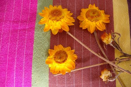 dry paper daisys left on pillow as gift photo
