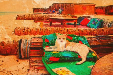 stray: original oil painting of some stray cat Stock Photo