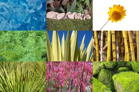 compilation: tear sheet compilation of nature and plants background Stock Photo