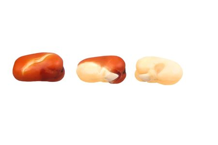 tremp�e: faba or fava beans soaked and in various staes of being peeled isolated