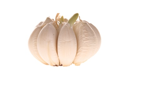 a garlic bulb segments isolated over white with sprout photo