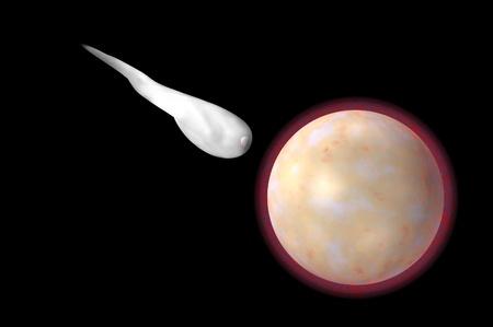 sperm and egg Fertilisation digital render image Stock Photo - 9315528