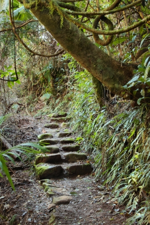 stone steps: area lamington national park gondwana land with a up the garden path overgrown background image
