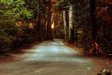 pandero: El camino menos transitado la unidad notorio entre Canungra y oreillys en el parque nacional de Lamington Foto de archivo