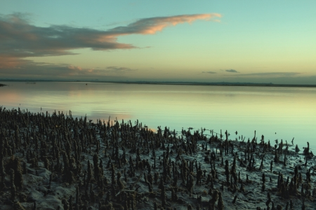 mangrove root stuble with sunrise backdrop Brisbane nudgee beach photo