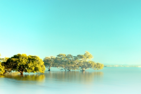 moreton bay figs in stylised foggy beach background with copyspace