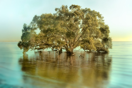 moreton bay figs in stylised foggy beach background  photo