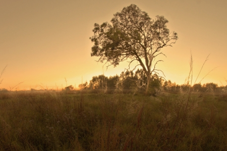 the outback: bush land gum tree landscape in bondall wetlands brisbane Stock Photo