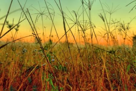 australie landschap: inheemse grassen en onkruid als achtergrond afbeelding uit bondall wetlands brisbane