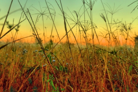australia landscape: native grasses and weeds as background image from bondall wetlands brisbane