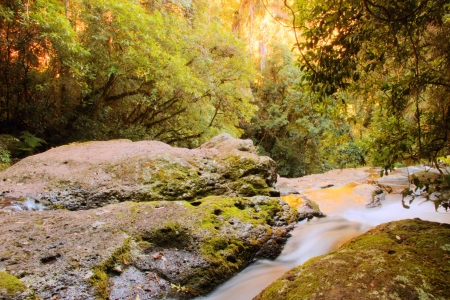 world heritage area elabana falls in the gold coast hinterland lamington national park photo