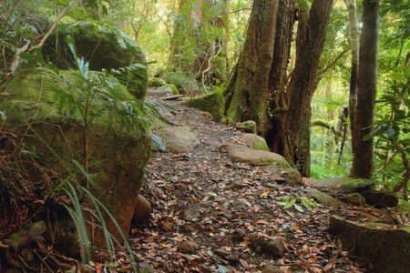 a path background featuring world herigtage lamington national park photo