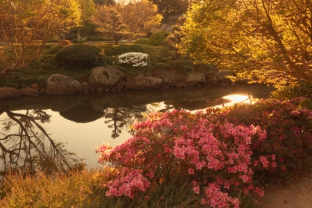 toowoomba: The usq Japanese gardens in Toowoomba  darling downs during carnival of flowers
