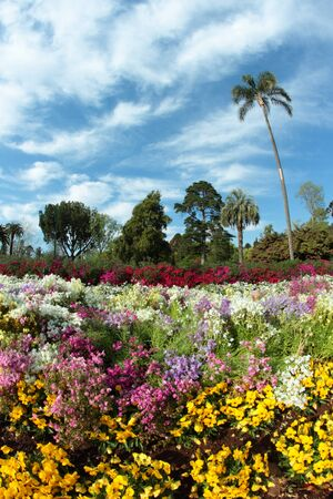 toowoomba: australian south east queensland tourist attraction the flowers of carnival toowoomba  Stock Photo