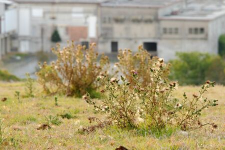 toowoomba: old dilapidated factory background with weeds toowoomba queensland australia