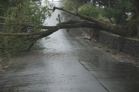 BRISBANE, AUSTRALIA - JANUARY 27 : Trees fallen across road during  tropical cyclone Oswald on January 27, 2013 in Brisbane, Australia