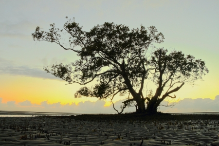Silhouette of magrove tree nudgeee beach australia brisbane photo