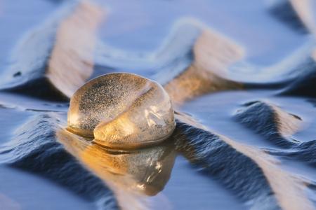Polinices sordidus leaden sand snail egg mass natvie australian moreton bay marine reserve