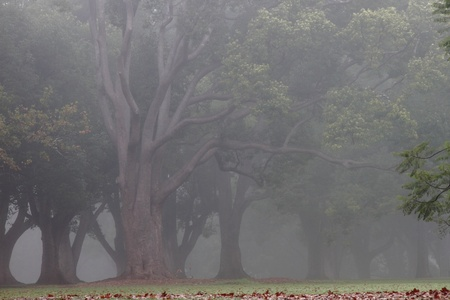 natural  moody: Queens park Toowoomba Australia foggy drizzel garden path background Stock Photo